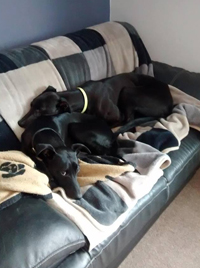Donna - Black Greyhound