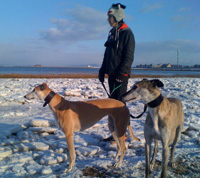 greyhounds on Morecambe beach