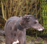 Flower - Black Greyhound