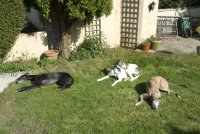 Bobby with Kate and Indi in the garden