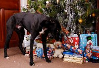 Chcking his presents