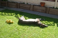 Fast asleep on the lawn
